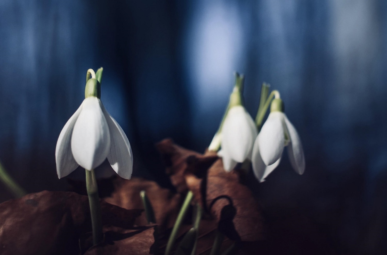 First March by Ivor Gurney —Poem Analysis