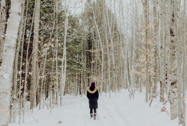 birches frost analysis